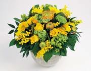 brudeslør blomst betydning